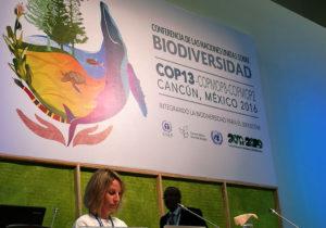 Discusión en la COP13: acabar con la malaria o con los mosquitos