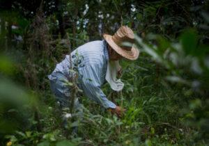 Veracruz: 11 cementerios clandestinos, 572 cuerpos y miles de restos calcinados