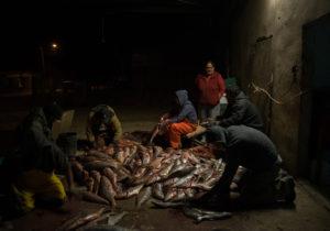 Países latinoamericanos actualizan reglas de pesca por sustentabilidad