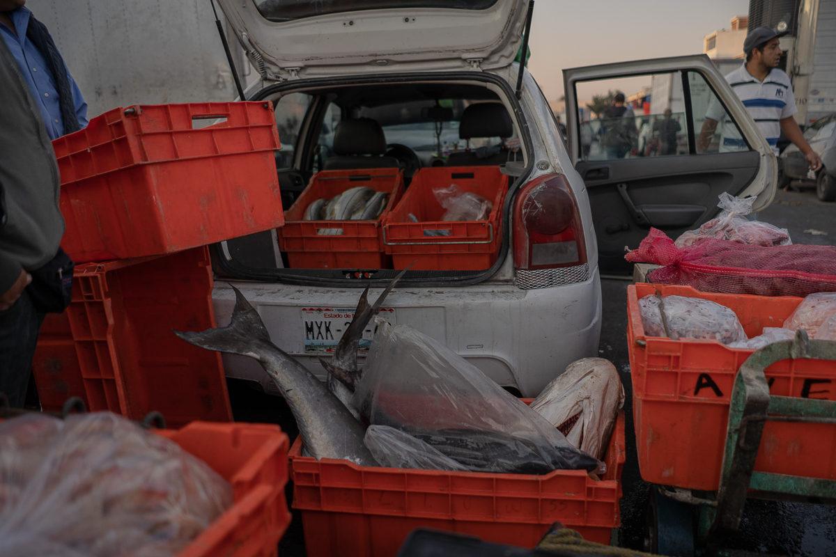 Comerciantes de pescado del Mercado de San Juan, considerado de especialidades y gourmet, se surten de mercancía proveniente del mar.
