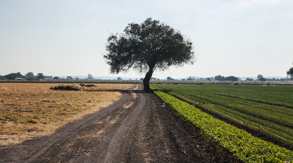 Un mapa para entender la agroindustria mundial