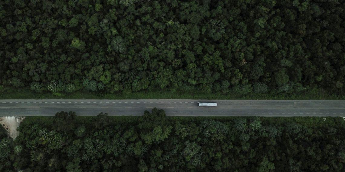 ¿Alternativas para mitigar daños del Tren Maya?