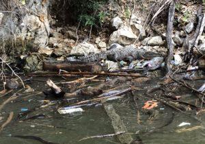 Cocodrilo en peligro de extinción muere por ingerir plástico