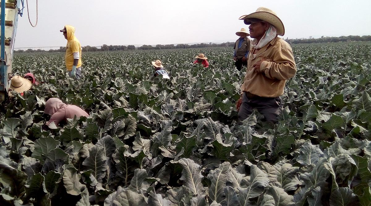 Las manos detrás del imperio de hortalizas