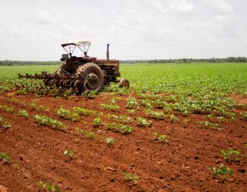 Los mayas que derrotaron a Monsanto