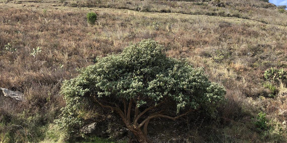 Zonas de conservación, las áreas verdes más olvidadas