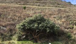 Zonas de conservación, las áreas…