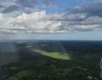 Viraje en la política ambiental