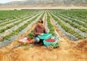 San Quintín: esclavos del siglo XXI