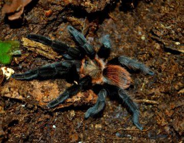 Arañas: mitos y realidades