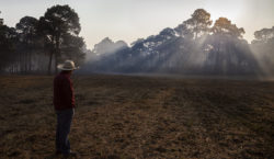 Instrucciones para arrasar los bosques…