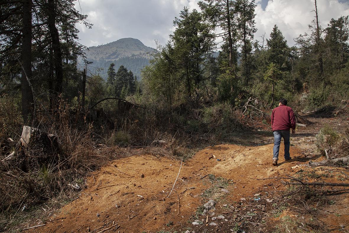 En las faldas del ajusco, existen aserraderos clandestinos, que obtienen la madera de taladores ilegales.  Foto Duilio Rodríguez.