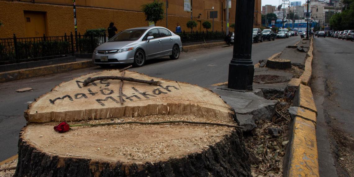 Mítikah pagará 40.8 millones de multa por talar más de 80 árboles