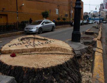 Van contra Mitikah por tala ilegal