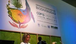 En la COP13, los Estados…