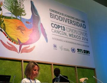 En la COP13, los Estados aplastan derechos de los pueblos originarios sobre sus conocimientos ancestrales