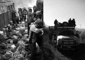 Morir en los campos agrícolas