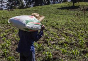 Tropieza la 4T en Guerrero con el fertilizante