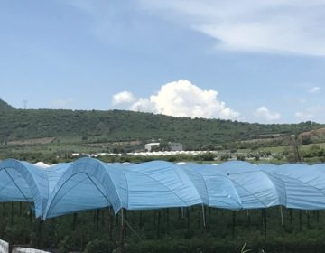 Invernaderos en Jocotepec: el fruto de la desigualdad