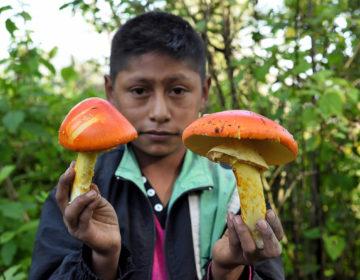 Los niños de los hongos