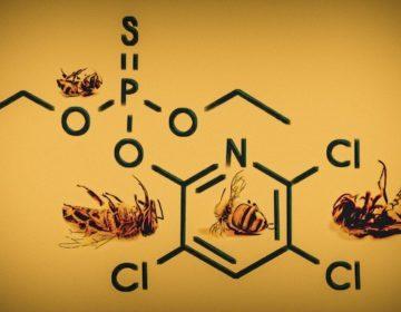 En Guanajuato, proponen multas para proteger abejas; Salud las extermina