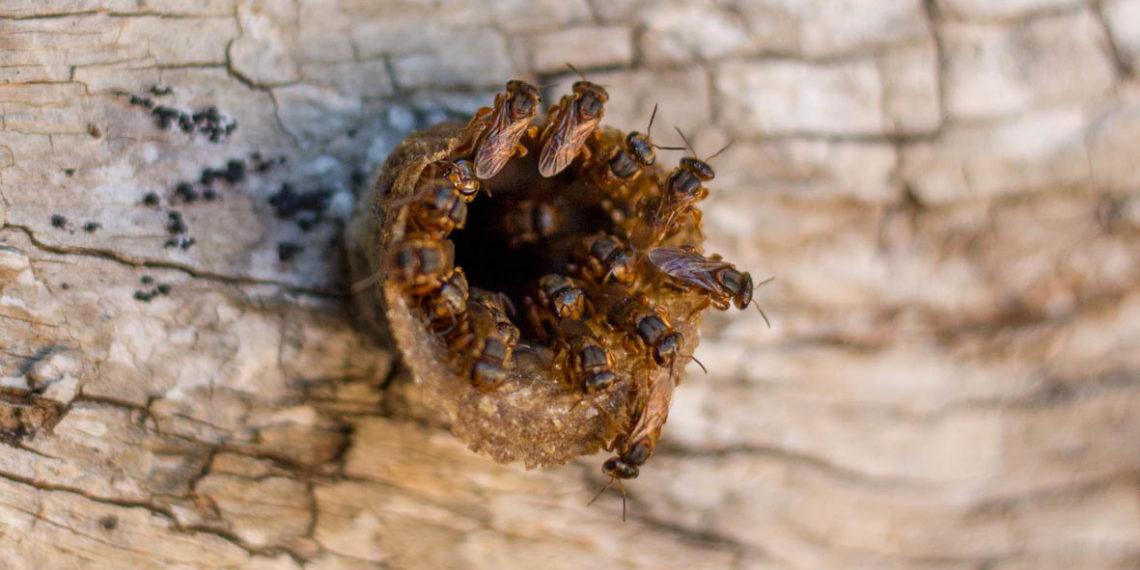 """""""¿Qué le pasó a las abejas?"""", un documental contra la extinción"""