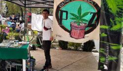 Piden legalizar mariguana con campamento…