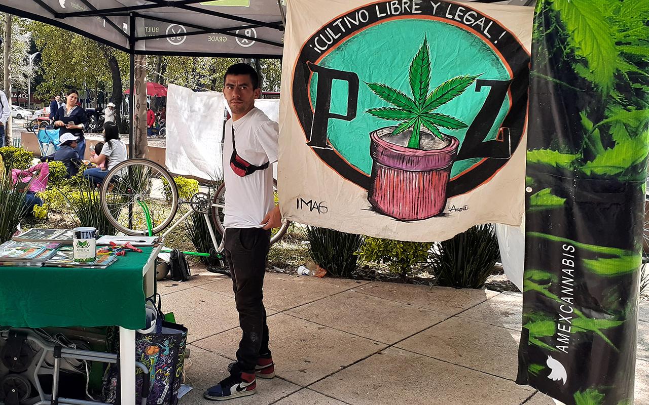 Piden Legalizar Mariguana Con Campamento Afuera Del Senado Pie De Página