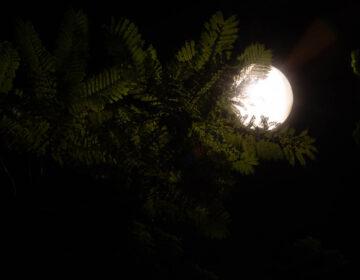 Te observo, Luna mía