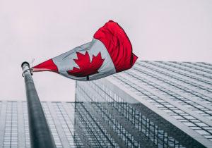 Cannabis colonialista canadiense