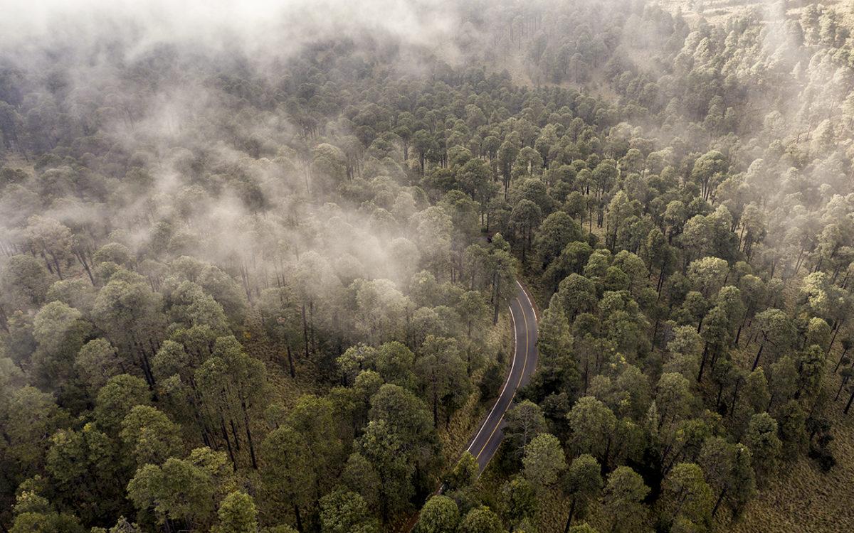 3600 metros es la altura en la que comienza el área natural protegida en la zona conocida como parque Izta-Popo.Foto Duilio Rodríguez.