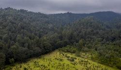 Para reforestar el Izta-Popo, hay…